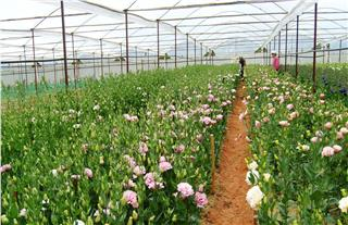 Travel Dalat to enjoy garden tours