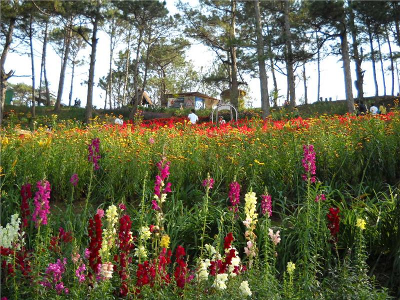 Valley of Love in Dalat