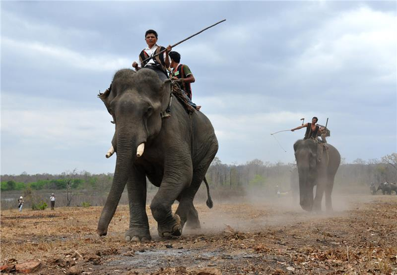 Elephant racing festival in Central Highlands