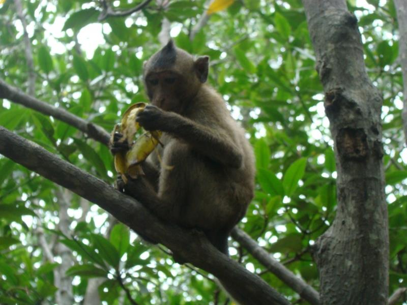 Monkey Island in Can Gio Forest
