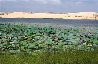 Lotus Lake Mui Ne