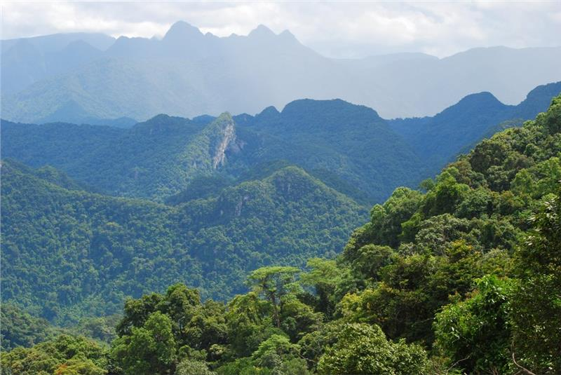 Rainforest in Phong Nha Ke Bang National Park