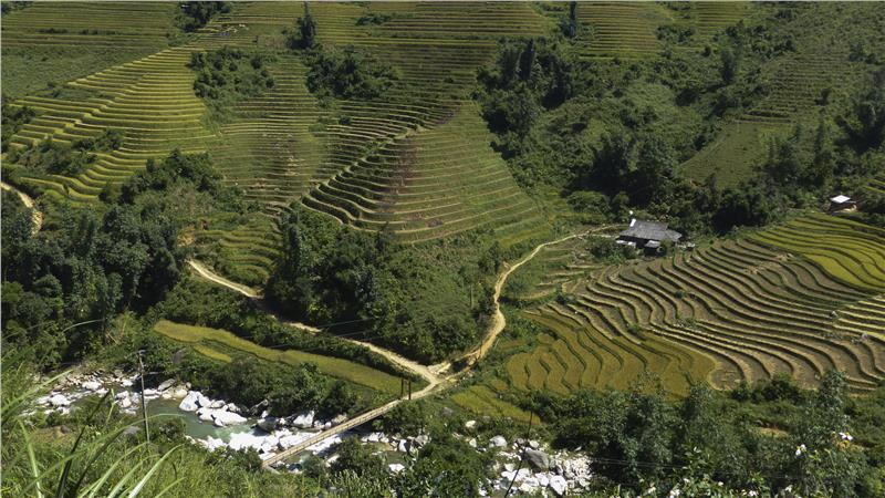 Hills with rice terraces in Sapa