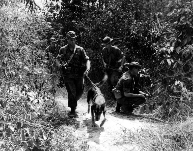 A scout dog leading a patrol in a search for Vietcong