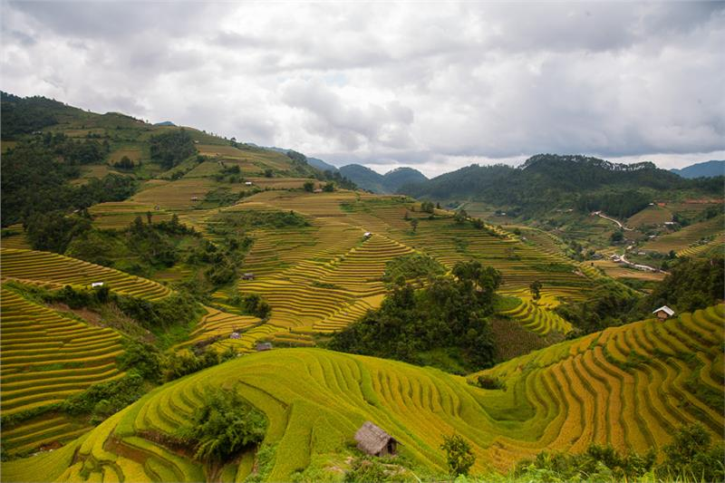 Mu Cang Chai - Terraced fields